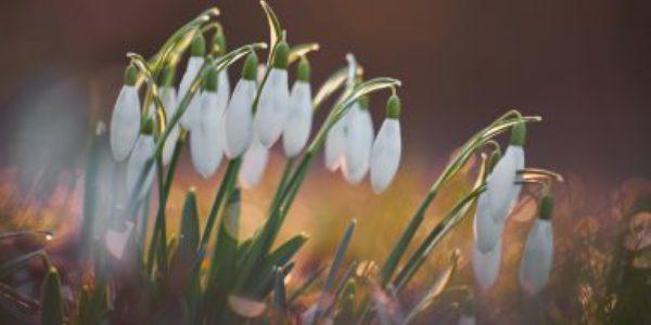 Spring Newsletter March Website